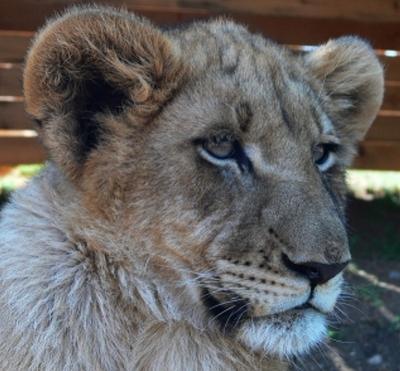 Lions Parc Johannesburg